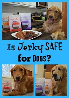 Is jerky safe for do