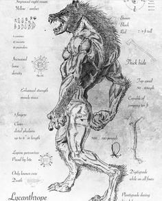 """Lycanthropy is the mythological ability or power of a human being to undergo transformation into a werewolf. A werewolf (from Old English: wer, """"man""""), man-wolf, or lycanthrope (Greek: λυκάνθρωπος,. Fantasy Kunst, Fantasy Art, Werewolf Art, Werewolf Mythology, Werewolf Drawings, Werewolf Tattoo, Werewolf Hunter, Alien Drawings, Arte Obscura"""