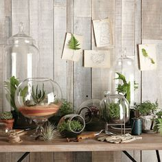 20metriquadri: Tanti look per il vaso trasparente
