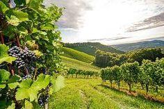 Steven Zoernack - Discusses Top Emerging Wine Regions in California https://b...