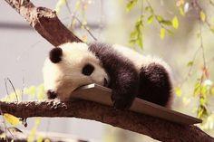 Сладкий, сонный ребенок :-)