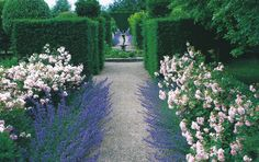 Blocks of topiary preceded by matched beds of roses and catmint set of a distant fountain.