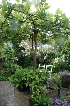 pflanztipps f r rebst cke leckere eigene tafeltrauben garten pflanzen garten und garten. Black Bedroom Furniture Sets. Home Design Ideas