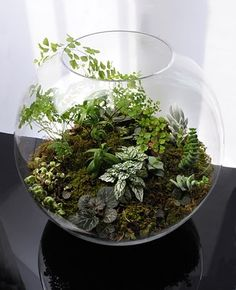 Grow Little:: Based in Paris, the terrariums are made in hand blown glass vessels of various sizes, each is an original, hand made art piece with a unique miniature landscape. They are so beautiful!