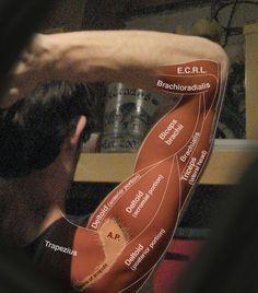 Anatomía descriptiva de los músculos del brazo. La Unidad Especializada en Ortopedia y Traumatología S.A.S www.unidadortopedia.com es una clínica supraespecializada enfermedades del sistema osteoarticular y musculotendinoso. Ubicados en Bogotá D.C- Colombia. PBX: 571- 6923370, 571-6009349, Móvil +57 314-2448344, 300-2597226, 311-2048006, 317-5905407. Nota: Si Usted vive en U.S.A favor comuníquese a nuestra oficina virtual 561-5946854. Yoga Anatomy, Anatomy Study, Human Anatomy, Anatomy Reference, Anatomy Drawing, Upper Limb Anatomy, Elbow Anatomy, Drawing Reference, Wrist Anatomy