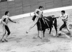 "El torero José Cubero ""Yiyo"", That's the moment the bull broke his heart. Goats, Cow, Horses, Challenges, Animales, Historia, Art, Horse, Goat"
