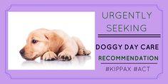 Pet owner seeking #doggydaycare #reviews http://petstayadvisor.com.au/ #KIPPAX #ACT