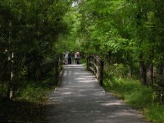 Just 17 miles from downtown New Orleans, the Barataria Preserve Trails are gorgeous.