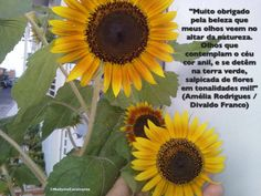 """""""Muito obrigado pela beleza que meus olhos veem no altar da natureza. Olhos que contemplam o céu cor anil, e se detêm na terra verde, salpicada de flores em tonalidades mil!"""" (Amélia Rodrigues / Divaldo Franco)"""