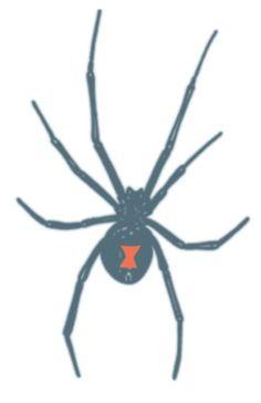 9 Best Black Widow Spiders Images Black Widow Spider