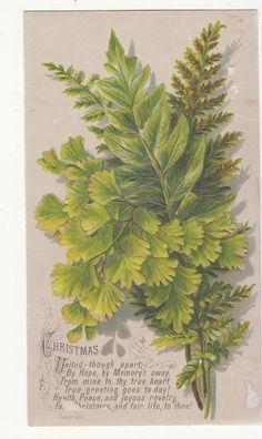 Christmas United Though Apart Verse Ferns Greens Victorian Card C 1880s | eBay