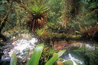 Selva riparia en una cañada muy húmeda de la vertiente amazónica, donde abundan epifitas como anturios y orquídeas, y diversidad de bromelia...