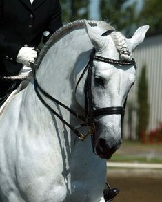Proper running braid-they are supposed to be tight to your horses' crest so they stay put, not long and droopy, again it can do not so positive things for your horses' neck if done incorrectly..