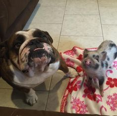 And these two friends putting on a very persuading display for some treats. | Just 21 Really Great Dog Pictures