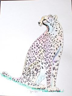 Yawning Cheetah Watercolor Painting by KnucklePrints