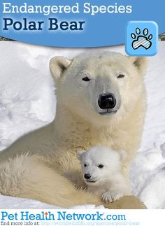 Endangered Species Day!