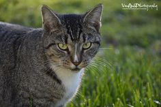 Cat - http://www.1pic4u.com/blog/2014/09/26/cat-54/