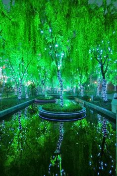 Magical Forest in Shanghai. I have not been to Shanghai but it is on my bucket list.
