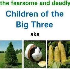 Thalia as a pine tree, Percy turned into a guiani pig, and nico turned into corn in hoh.