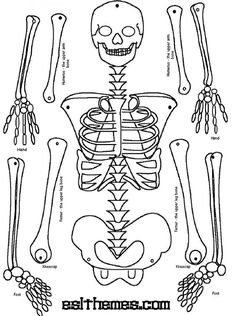 In this category you can see different Human skeleton coloring pages and print them. We regularly update the database of coloring pages Science Lessons, Teaching Science, Science Activities, Science Projects, School Projects, Skeleton For Kids, Skeleton Craft, Human Skeleton, Skeleton Pics