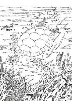 Рисуем по точкам. Черепаха