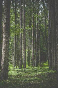 Luôn luôn mong muốn mỗi sáng tỉnh giấc được nhìn thấy quang cảnh thế này.Forest