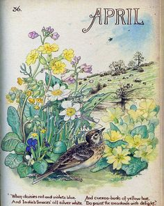 Vintage Botanical Book Plate - April - Spring - Country Diary of an Edwardian Lady - Edith Holden - Shakespeare - Browning Edith Holden, Art And Illustration, Botanical Illustration, Vintage Pictures, Vintage Images, Vintage Art, Vintage World Maps, English Flowers, Nature Journal