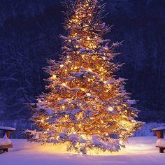 ❄️✨❄️✨❄️ #christmas #christmastree #christmastime #snow #christmas #christmasgift #christmastree #instafollow #tagforlikes