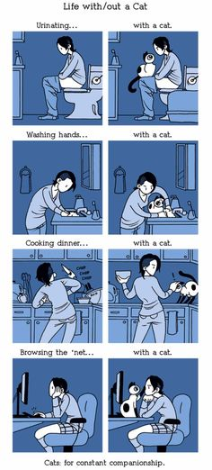 She shares what life with a cat is like, and I can't stop laughing. Cat lovers get it