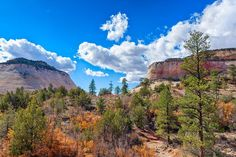 Golden Zion by John M Bailey  #Utah #Travel #photography #NationalParks #PhotoArt