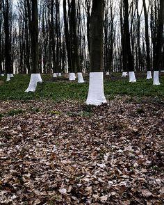 Wrapped trees by Zander Olsen http://www.adaglance.nl