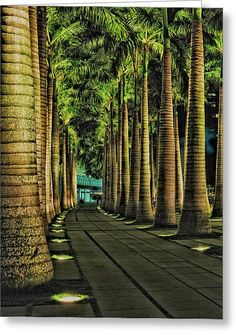 ✮ Singapore Fullerton Harbour walk has rows and rows of beautiful Palm tree pathways Travel Honeymoon Backpack Backpacking Vacation Landscape Architecture, Landscape Design, Garden Design, Places To Travel, Places To Visit, Singapore Travel, Wanderlust Singapore, Tropical Landscaping, Landscape Lighting