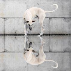 Dog Portraits by Elke Vogelsang