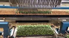 So smooth, seemingly gentle, and ridiculously time efficient, the transplanting pack planter robot in this Bob's Market and Greenhouses video moves crowded plants from smaller containers to much large