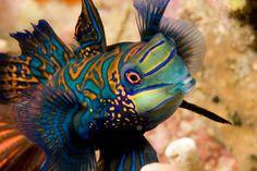 Stofftiere Spielzeug Ty Beanie Boos Sami The Orange Fisch Plüsch SchöNe Lustre