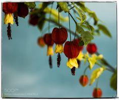 http://ift.tt/1ZY8ZTJ #Nature breathtaking #Photos Hojas by LuisZaf http://ift.tt/1RcK5KH