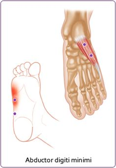 Superficial Foot Muscle: Abductor Digiti Minimi