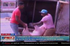 Alcalde De Yamasá Quiere Cobrar RD$ 350.00 Por Cada Animal Sacrificado