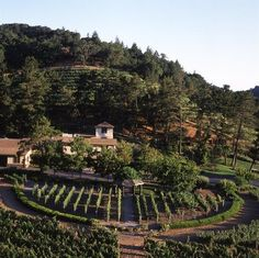 Pine Ridge Winery - Silverado Trail - Napa.  Best place I've found to go while the grapes are on the vines because of their demonstration vineyard out front for tasting the various grapes.  Very nice wines (reds) and tour as well.