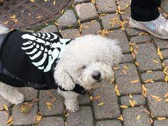 Joey on Halloween - Boo!