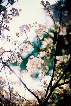 "~ Spring Pirouettes ~ ""Life is the dancer and you are the dance."" ~Eckhart Tolle"