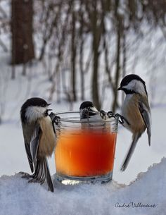 """magicalnaturetour:  """"Discussion around glass"""" by Andre Villeneuve: sippin cider"""