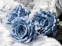 Umělé růže v trendové pastelové modré jsou jako živé: http://www.harasim.info/82138/umela-ruze-modra-75-cm.html