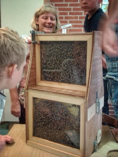 Observationhive bees