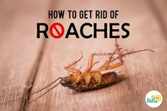 How to Get Rid of Roaches Fast without an Exterminator | Fab How