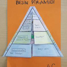 4.sınıf Besin Piramidi..Cannur HAZNEDAR Science Education, Math Classroom, Nutrition, Activities, School, Cover, Books, Human Body, Notebooks