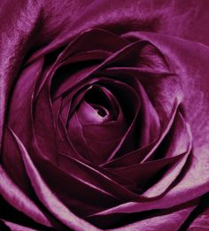 Purple Passion Photograph by Cathie Tyler - Purple Passion Fine Art Prints and Posters for Sale