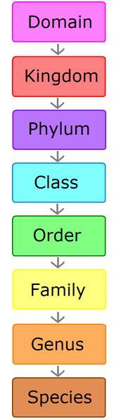 Scientific biological classification