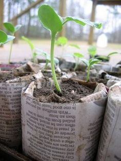 seedling cups made from a single sheet of newspaper, can plant the whole thing