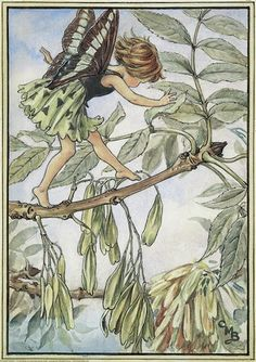 Illustration for the Ash Tree Fairy from Flower Fairies of the Trees. A girl fairy dances from left to right along the branch of an ash tree. The tree is covered with seeds. Author / Illustrator Cicely Mary Barker More Más Cicely Mary Barker, Tree Illustration, Fantasy Illustration, Fairy Names, Ash Tree, Cross Stitch Tree, Vintage Fairies, Beautiful Fairies, Flower Fairies